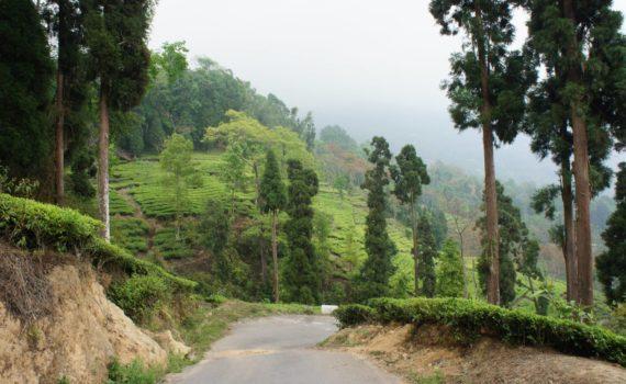 homestay near darjeeling