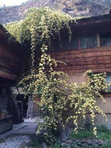 raju guesthouse